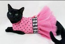 Mascotas - Fashion / dress dog cat harness