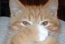 Ternuritas / mascotas, gatitos, perritos, animales