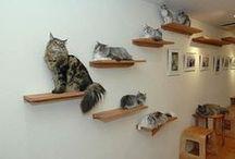 Mascotas - Cats decoracion Hogar / espacio bienestar de los gatitos de la familia
