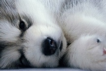 Cute animals<3