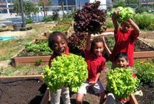 Youth gardening / Inspiration about gardening with children and youth. We're experts on gardening with kids and we host the oldest annual symposium on the topic.