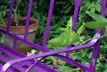 Purple gardens