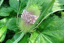Buiten leven / Buitenleven is breed, tuin, bloemen, dieren enz