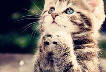 Animal/Dieren / Grappige mooie leuke en lieve foto's van alle soorten dieren!