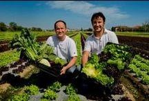 ...e produttori!! / Azienda Agricola Zanarini Luciano via Belvedere di sotto, 15 41057 Spilamberto (Modena)