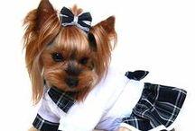 Yorkshire Terrier / Kutyaruhák európai tervezőktől, minőségi kivitelezésben, kifejezetten Yorkshire terrierekre tervezve. Választékunkban megtalálhatóak a téli és átmeneti, fiús és lányos, sportos és elegáns modellek, és persze az elmaradhatatlan különlegességek azoknak, akiknek a kutyaruha egyenlő a kutyadivattal.