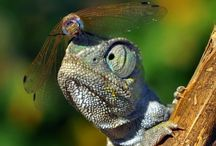 Wunderbare Welt der Tiere...
