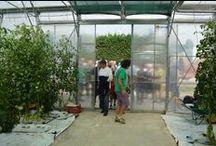 AZIENDA APERTA: Visitando la nostra serra / 14 giugno 2015: AZIENDA APERTA Visitando la serra alla scoperta delle nostre coltivazioni. Tanta tecnologia e un ampio assortimento di colture.