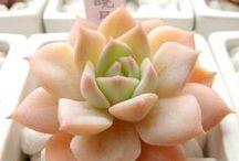 Succulents / love me some cool alien plants