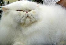 Cats / Love, love, love cats!!