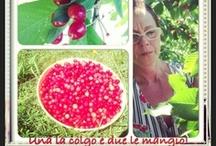 Cherry jam / home made cherry jam