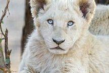 Animales sauvage / Toutes la beauté des animaux sauvages.