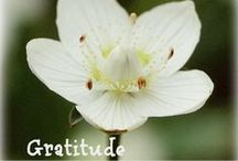 Gratitude / Gratitude helps us change our thoughts and creates a flow of good feelings in our body to instantly transform our mood. Cultivate the feeling of appreciation and learn to be grateful with these handy hints and links.