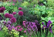 Gardening dreams 2015 / Ideas and inspiration for the gardening season 2015