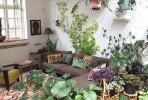 house plants /