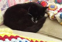 Blankets and afghans and quilts / ....and a sleepy black cat! / by Carolyn Rivett