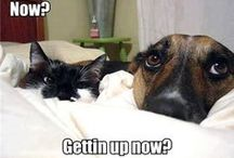Life with #Pets / Animals make our lives better!