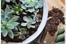 [Gardening] / Giardinaggio creativo.