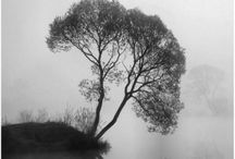 b&w | dreamy / black & white • dreamlike • surreal • misty • fog • eerie • haunting • mystical • ethereal