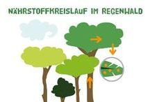 Infografiken über den Regenwald / Infografiken von Abenteuer Regenwald