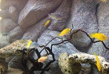 DIY aquarium 3D background / Make ur own diy Aquarium 3d background