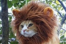 Cats / A cat is a lion in a jungle of small bushes