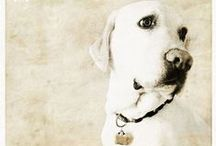 DOG ADORABLEs ~ III / by Kristin