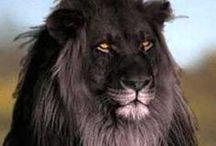 Amazing Wildlife / Amazing Wildlife Photography