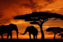 Travel Kenya / The best travel spots in Kenya
