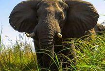 Nomadic by Nature Zimbabwe / Selected images from the Nomadic by Nature travel blog set in Zimbabwe.