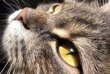 my cat...♡♡♡♡
