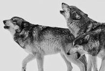 howling b r o t h e r s