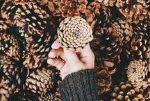 ae: a u t u m n / autumn