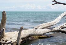 Point Pelee, Ontario
