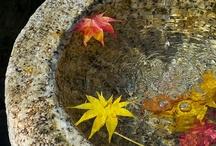 Season.Autumn.Acorn / by Laura Jayne