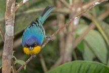 Aves/Birds / Fotos de aves /Birds photography