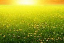 natura,soare,lumina