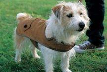 kutyaruha / Dog coat