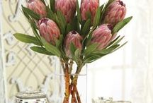 Tropical Paradise / Treating you to a taste of the tropics with exotic blooms & more