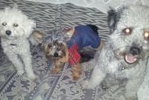 MIS BIXINOS / los tres perrinos k tengo, son una monada pa comerselos