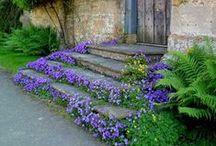 Dream garden