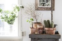 Provencal and Shabby