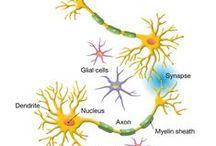 brain / praca mózgu