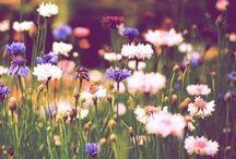 Plantes, fleurs et jardins ♥