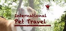 International Pet Travel | Reisen mit Tieren / Most of the time we traveled with our buddy, Vlou, the traveling Beagle. Also when hopping to other continents. Here you find information for pet owners who want to travel with their animals.