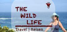 THE WILD LIFE - Travel | Reisen / THE WILD LIFE best travel tips and most beautiful Destinations - unsere besten Reise Tipps und schönsten Reiseziele