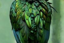 Colors: Emerald