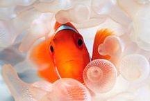 Inspiration: Sea Life
