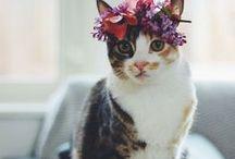 Inspiration: Feline