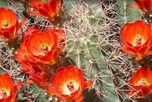 cactus/succulents/plants / by Sharon Rabena